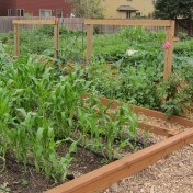 We don't have much room for veggies in our garden so we use the community garden in Orenco.
